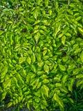 Zieleń liście świeżość obraz stock