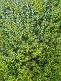 Zieleń liście świeżość fotografia stock