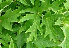 Zieleń liście obrazy stock