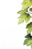 zieleń liście obrazy royalty free