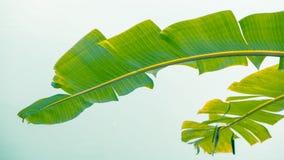 Zieleń liście - akcyjny wizerunek Obrazy Stock