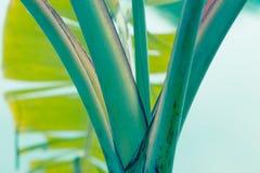 Zieleń liście - akcyjny wizerunek Obraz Royalty Free