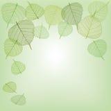 Zieleń liście, bezszwowi Fotografia Stock
