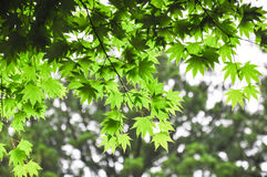 Zieleń liście brać po deszczu Zdjęcie Stock
