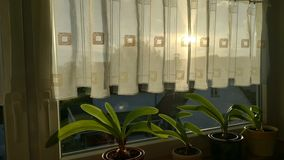 Zieleń liście cieszy się słońce Fotografia Stock