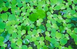Zieleń liście dla tła, zieleni/opuszczają tekstury tło fotografia royalty free