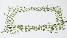 Zieleń liście i biały tło Obrazy Royalty Free