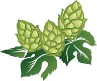 Zieleń liście i chmiel rożki ilustracji