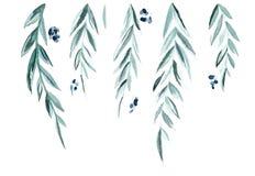 Zieleń liście i gałąź ilustracja wektor