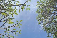 Zieleń liście i jasny niebo Fotografia Royalty Free