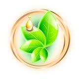 Zieleń liście i olej krople Obrazy Royalty Free