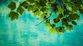 Zieleń liście i turkusowy jezioro obrazy stock