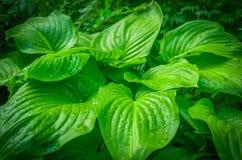 Zieleń liście kwiat w dżungli Zdjęcie Royalty Free