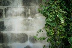 Zieleń liście na ścianie z kopii przestrzenią Fotografia Royalty Free