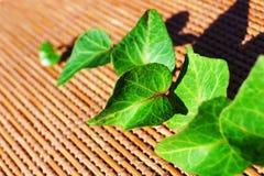 Zieleń liście na bambusowym tle Obrazy Royalty Free