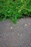 Zieleń liście na betonowym tle obraz royalty free