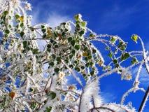 zieleń liście na białych gałąź Obraz Royalty Free
