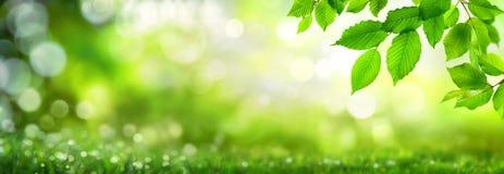 Zieleń liście na bokeh natury tle Fotografia Stock