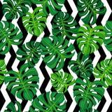 Zieleń liście na czarny i biały tle bezszwowy wzoru Zdjęcia Royalty Free