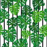 Zieleń liście na czarny i biały tle bezszwowy wzoru Obrazy Royalty Free