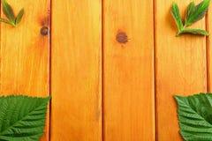 Zieleń liście na drewnianym stołowym tle Odgórny widok zdjęcia stock