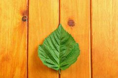 Zieleń liście na drewnianym stołowym tle Odgórny widok Obrazy Stock