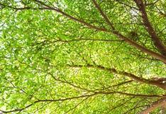 Zieleń liście na gałąź z ptaka gniazdeczkiem Obrazy Royalty Free