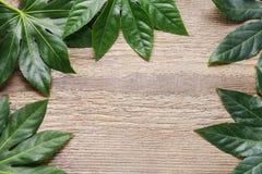 Zieleń liście na szorstkim drewnianym stole obrazy stock