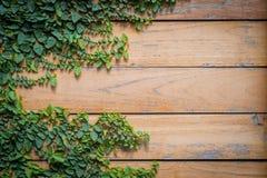 Zieleń liście nad deski drewna teksturą fotografia stock