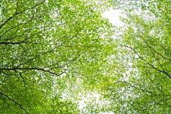 Zieleń liście pod jaskrawym niebem Zdjęcie Stock