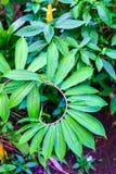 Zieleń liście przy tropikalną dżunglą Obrazy Royalty Free