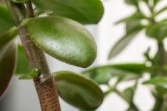 Zieleń liście rośliny zakończenie up obrazy royalty free