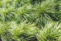 Zieleń liście trawy tło Obraz Stock