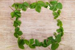 Zieleń liście truskawkowa dekoracyjna rama na drewnianym tle Obrazy Stock