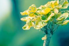 Zieleń liście w lesie - Akcyjny wizerunek Zdjęcia Stock