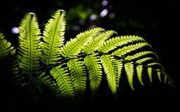 Zieleń liście w tropikalnym lesie tropikalnym Zdjęcie Royalty Free