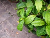 Zieleń liście z ceglanym podłogowym tłem Zdjęcie Royalty Free