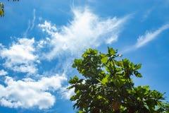 Zieleń liście z jaskrawym nieba tłem obraz royalty free
