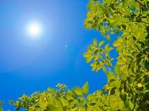 Zieleń liście z niebieskim niebem Fotografia Royalty Free