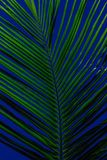 Zieleń liście z zielonymi klimatami abstrakcjonistycznymi zdjęcia royalty free