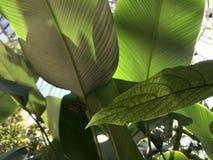 Zieleń liście Zaświecali światłem słonecznym z motylem w Backgroud Obraz Royalty Free
