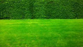Zieleń na zieleni: trawa spotyka żywopłot Obraz Stock