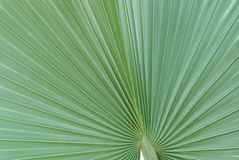 zieleń opuszczać palmy Zdjęcie Royalty Free
