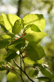zieleń opuszczać potomstwa Zdjęcie Stock