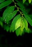 zieleń opuszczać potomstwa obraz royalty free