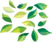 zieleń opuszczać set Fotografia Stock