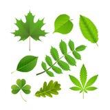 zieleń opuszczać set Obrazy Stock