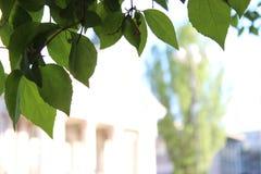 Zieleń Opuszcza Drzewnego przedpole Sofia Bułgaria I plama budynków tła miasto zdjęcie royalty free
