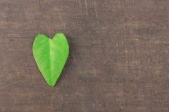 Zieleń opuszcza na stole, serce zieleń Zdjęcia Stock