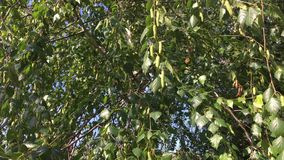 Zieleń opuszcza tło z słońca jaśnieniem przez liści Światło słoneczne promienieje między zielenią opuszcza na słonecznym dniu zbiory